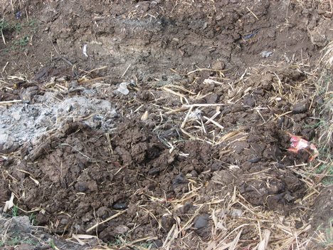 Cow Dung: A Composted fertilizer | Wealthy Waste